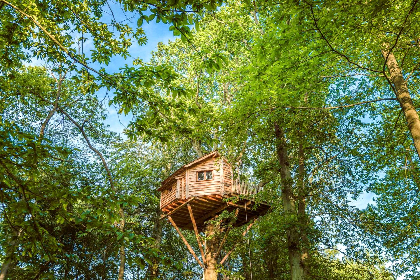Tree Houses (Oise, Hauts-de-France, France)