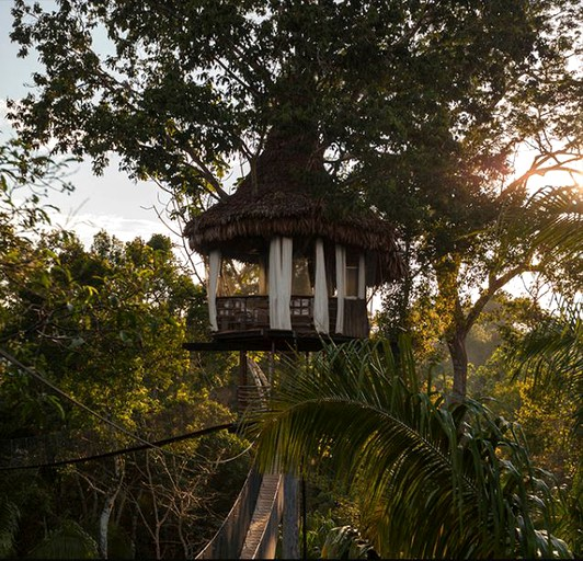 Simple Good Design Squirrel Treehouse on