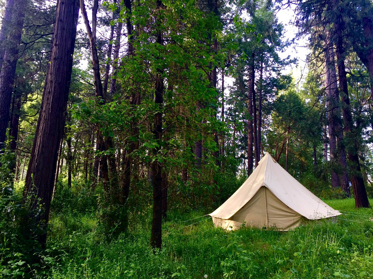 Bell Tents (Nevada City, California, United States)