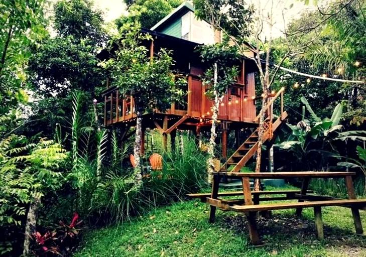 Tree House Near San Juan Puerto Rico
