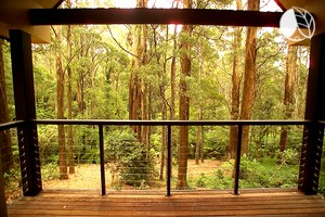 Photo of Luxurious Treehouses Within Australian Rainforest in Victoria, Australia