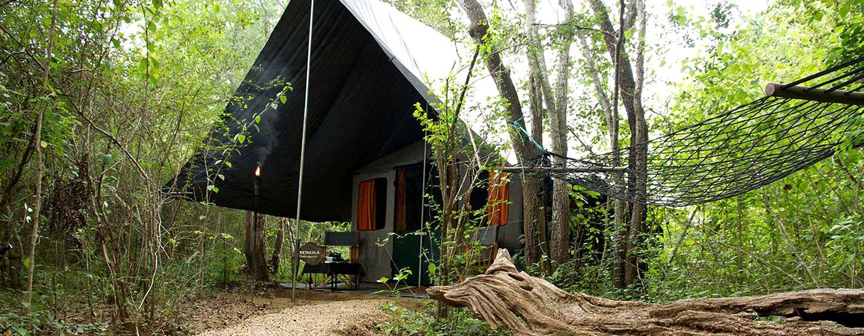 Romantic Camping in Yala National Park, Sri Lanka