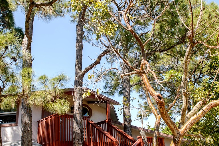 Tree House Rental In Florida