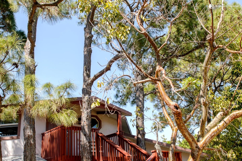 Tree House Rental In Florida