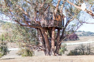 Photo of Rustic and Romantic Tree House Rental in Sonoma Wine County
