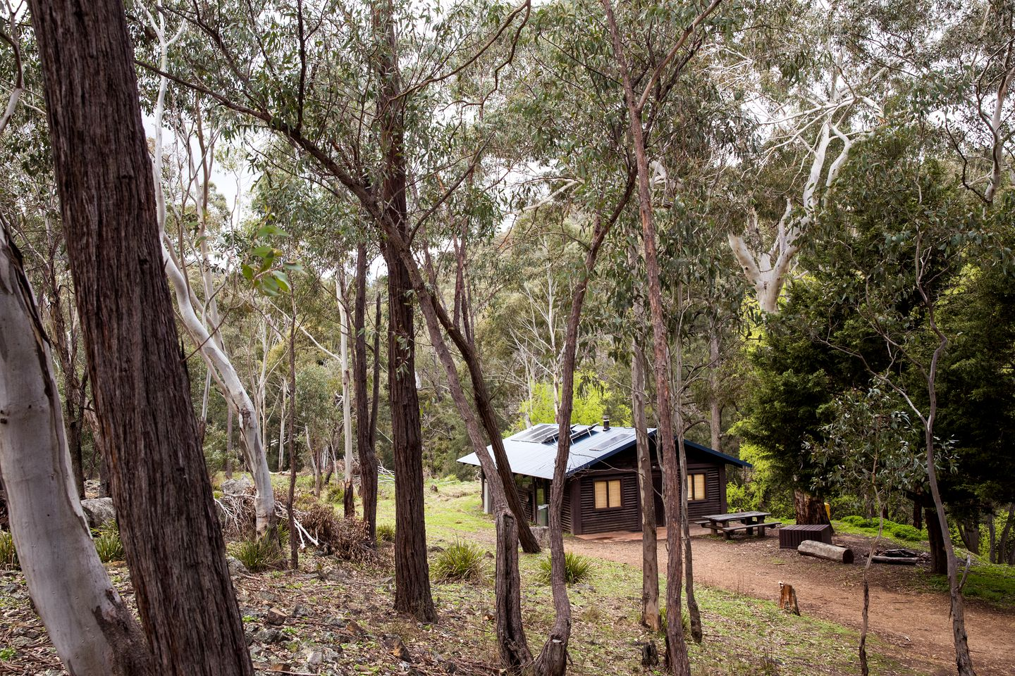 Small log cabin rental near the Blue Mountains in forest clearing with driveway for vehicles.