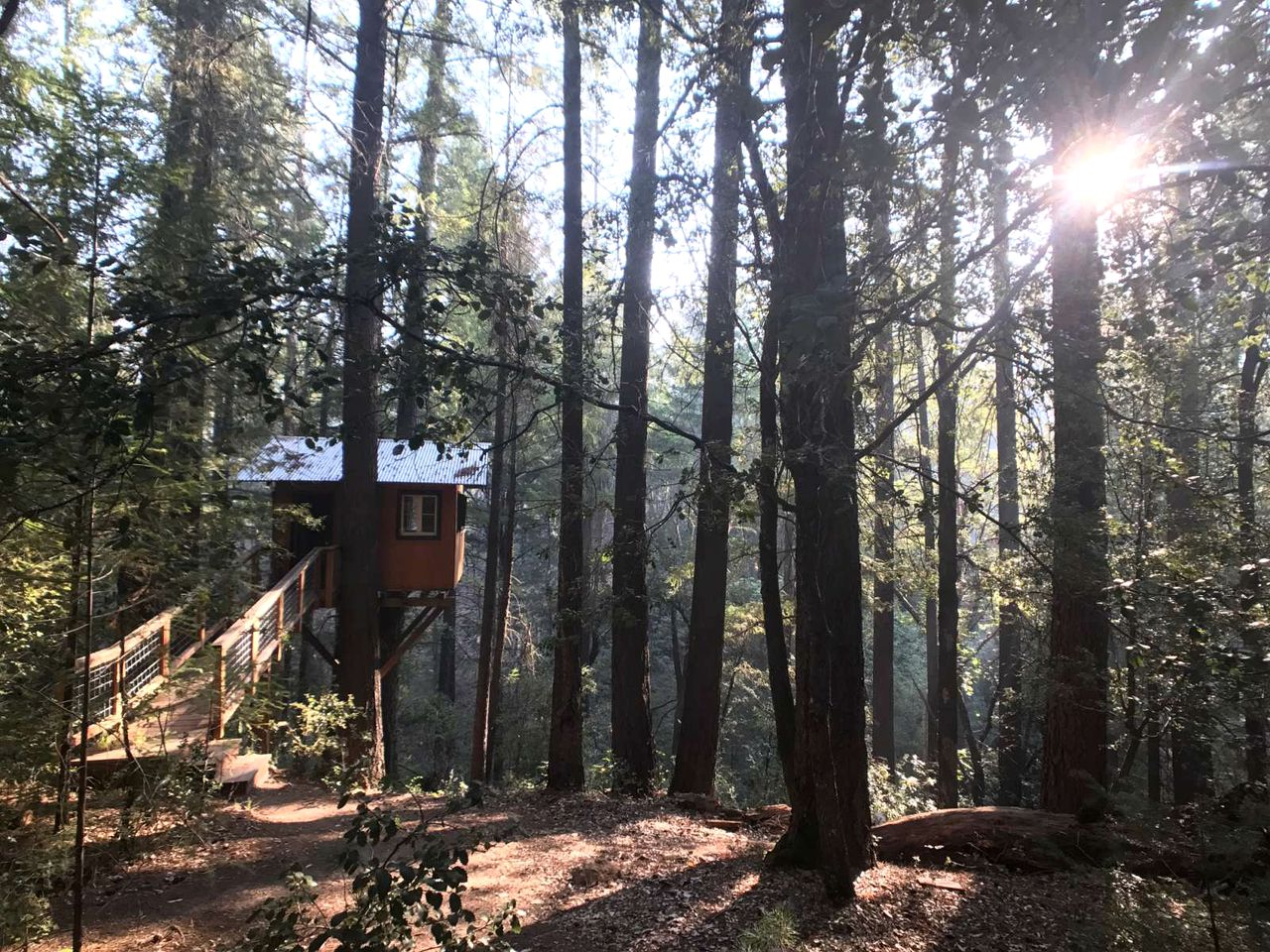Towering wooden Tree house rental in California.