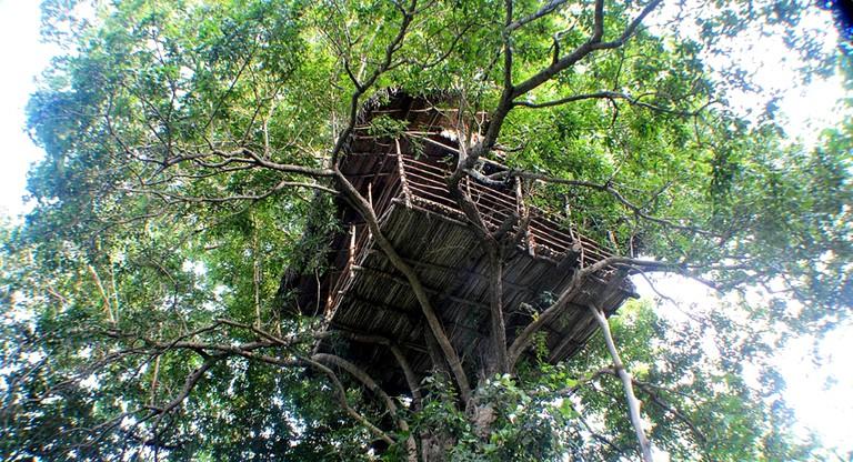 Towering Tree House Nestled In The Rainforest In Sigiriya Sri Lanka