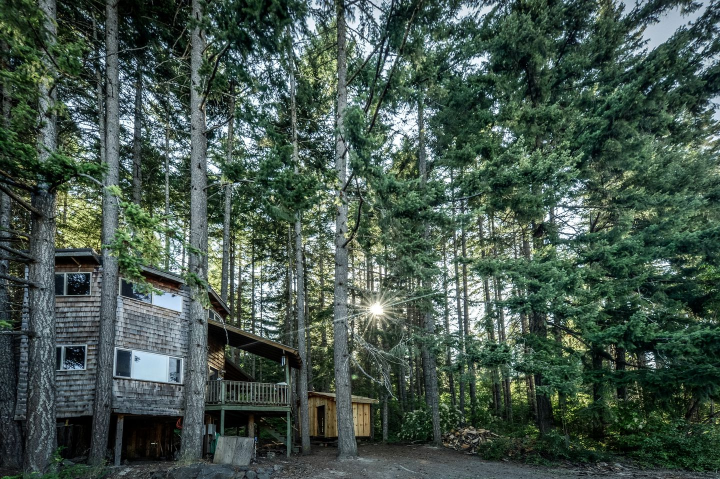 Go glamping! Washington sunshine through tall trees around tree house rental