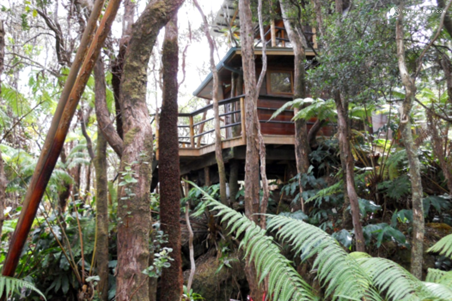Treehouse Pictures Tree House On Big Island Hawaii Near Volcano