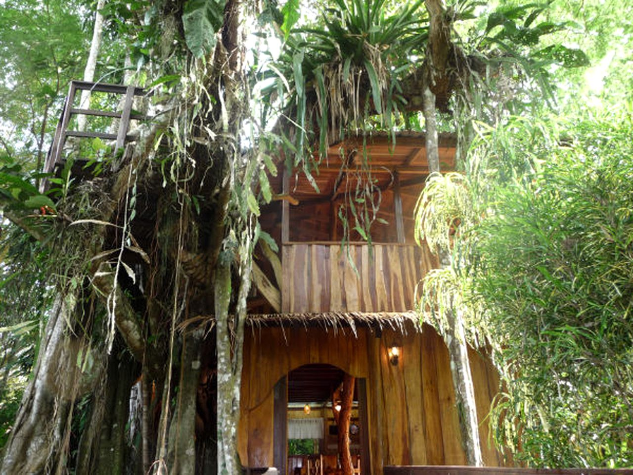 Tree Houses (Cahuita, Limón, Costa Rica)
