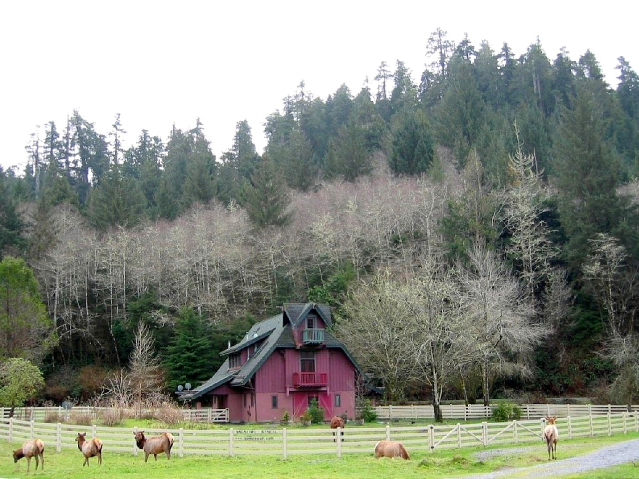 Unique farmhouse rental near in the Redwoods, CA