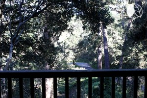 Photo of Water Meets Land at a Tree House Cabin in Carmel, California