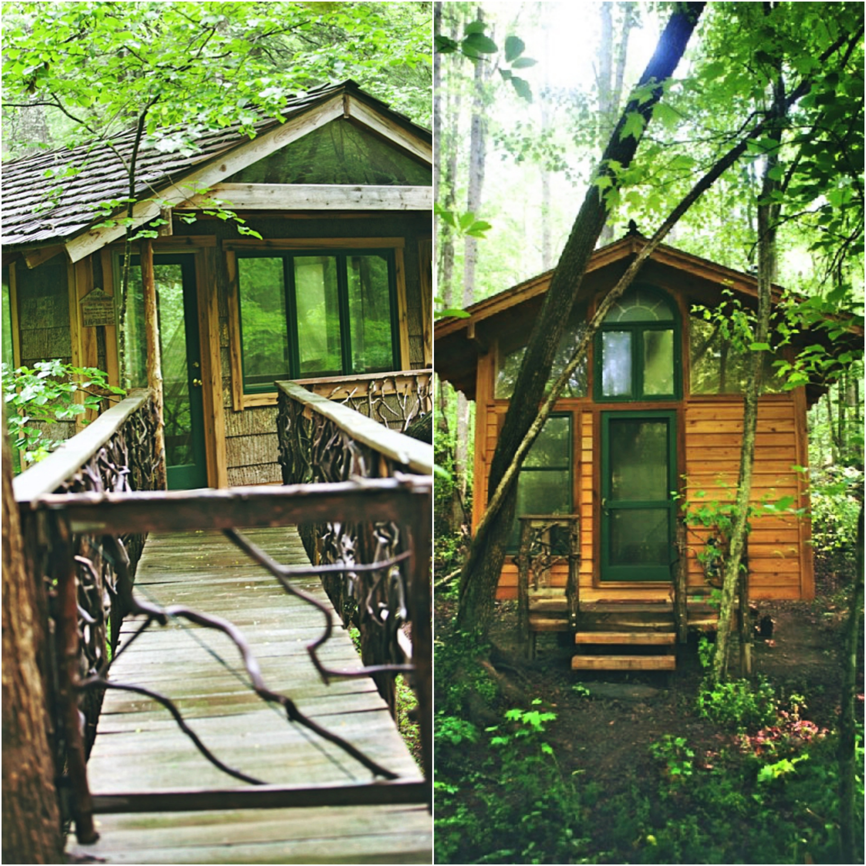 Pet friendly site with tree house in georgia for Luxury pet friendly cabins in north georgia