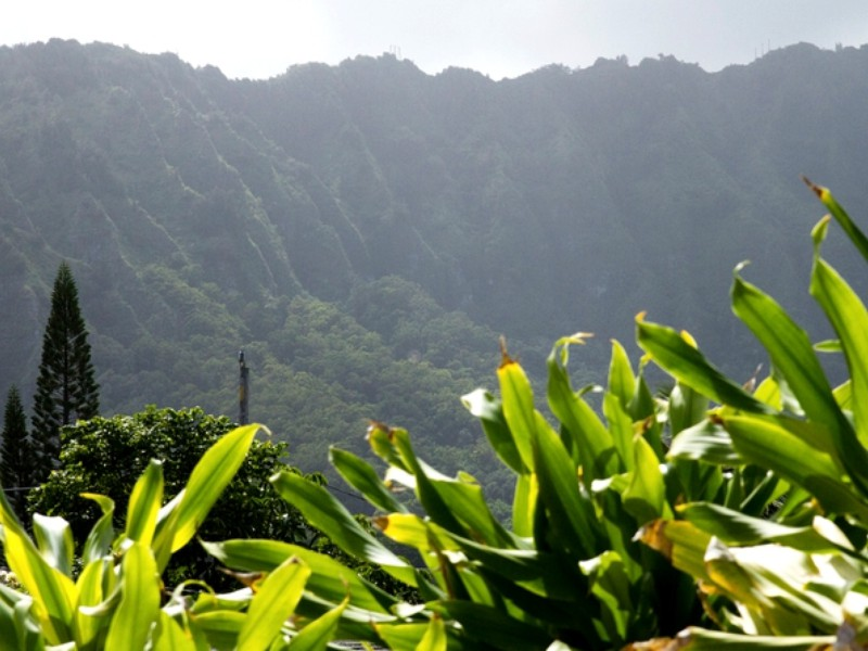The Aloha State's Most Eco-Friendly Retreats