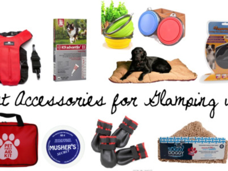 Best Accessories for Glamping with Pets