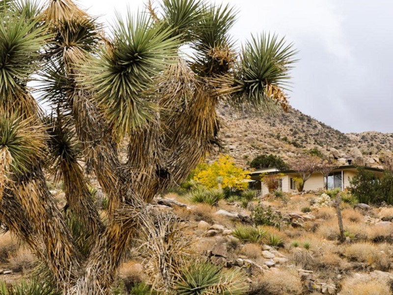 Best Kept Secrets in Joshua Tree