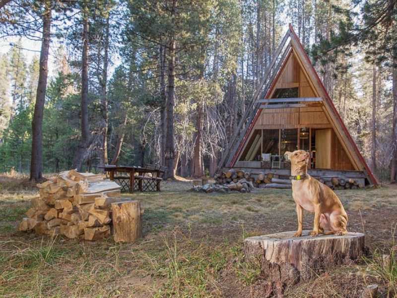Tuna's Top Tips for Glamping with Pets