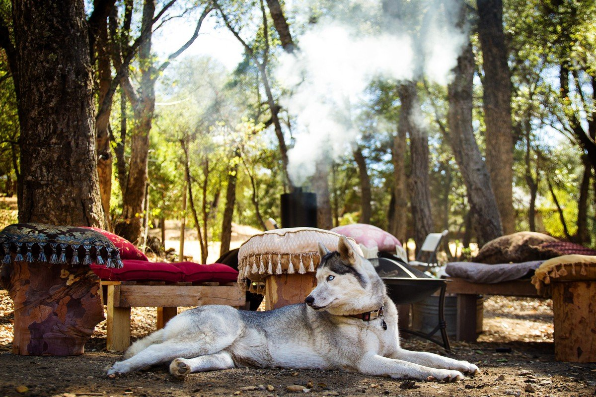 Pet-Friendly Cabins Oregon