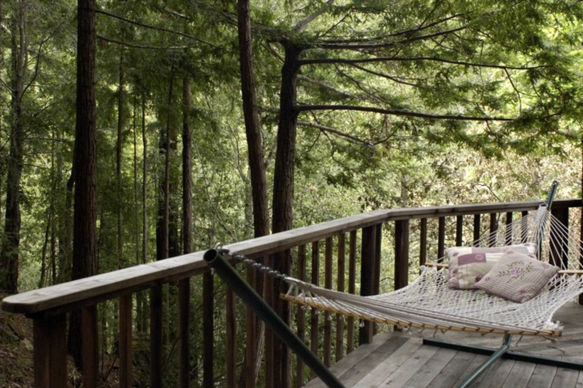 Pet-Friendly Rentals in the Big Sur