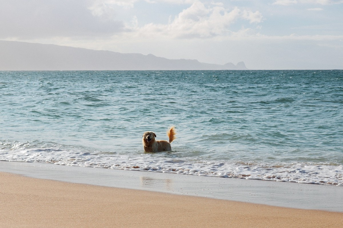 Pet-Friendly Rentals with Pools on the North Shore, Oahu