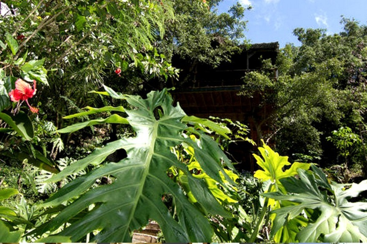Tree House Rentals near Hanauma Bay