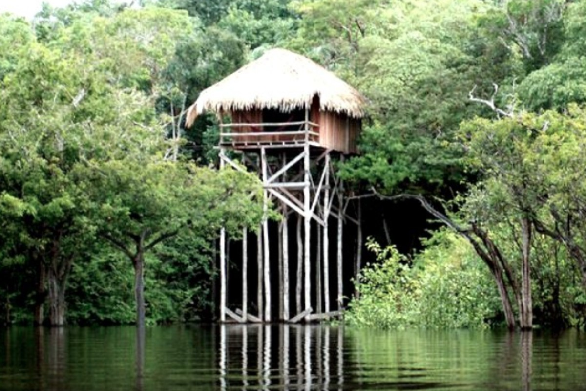 Treehouses Near Water