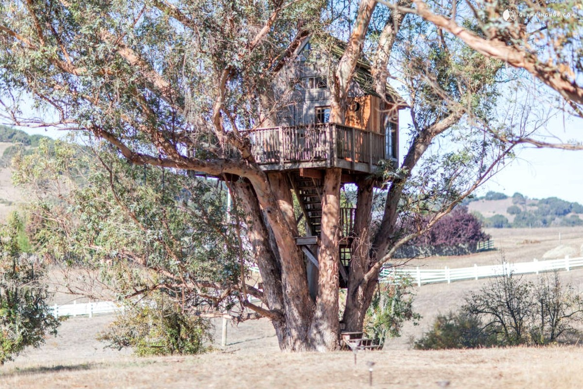Treehouse Rentals near Sonoma